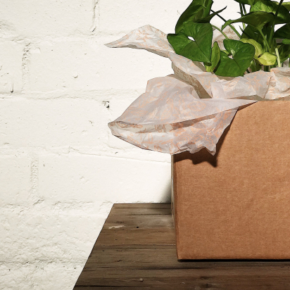 Introducing: noissue's 2019 Sustainable Packaging Study